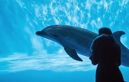 イルカを信じる