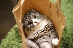 頭が悪い賢い猫