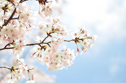 幸せって何幸せとは何か、それは桜