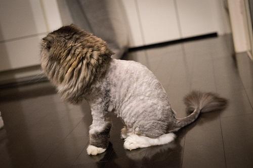 精神的に強くなりたい猫
