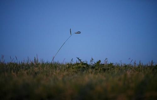 自意識過剰な草
