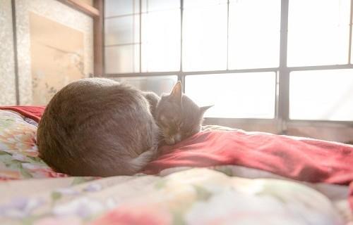社会不適合者の猫