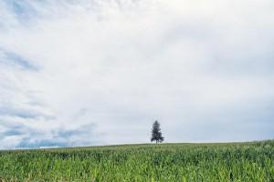 生きづらい草原
