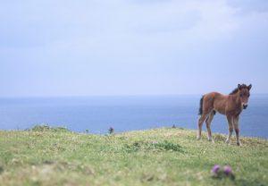 スクールカーストから解放の馬