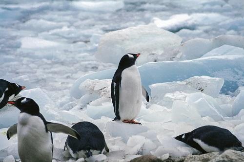 満たされないペンギン