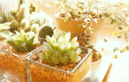 緊張しいな植物たち