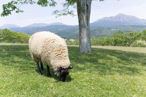 友達いらない羊