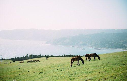 共依存の馬