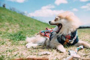 感情のコントロールはしない犬