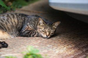 休む養生の猫