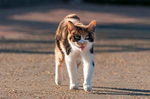 怒りっぽい性格の猫