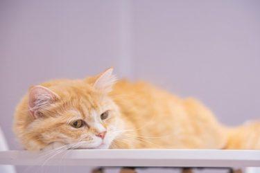 人間不信な猫