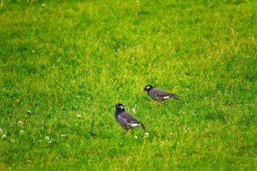 沈黙が怖い鳥