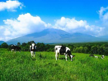心穏やかに生きる牛